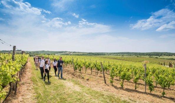 Loop mee met het Istria wine & walk evenement