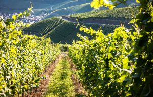 De beste wijngebieden van Kroatië